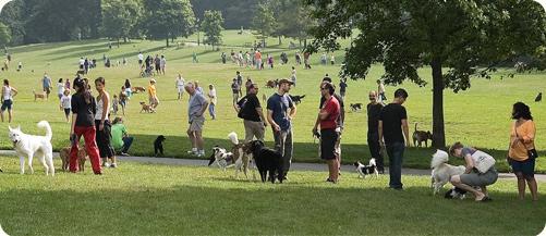 Dog Runs In Prospect Park